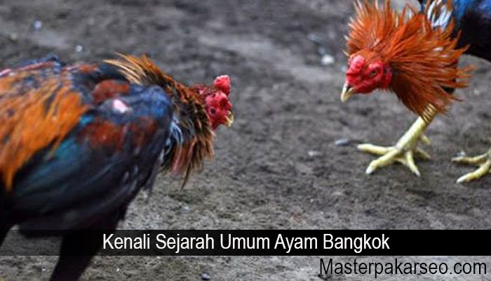 63 Gambar Ayam Ciung Wanara Kekinian